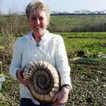 Ammonite fossil carved during woodcarving course in Devon by woodcarving course student